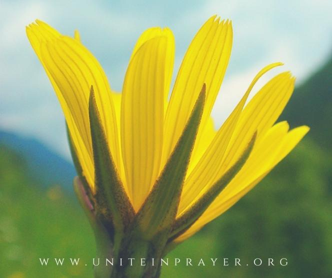www.uniteinprayer.org (51)